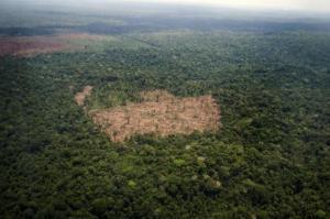 Vista de un área deforestada de la selva amazónica en Brasil el 14 de octubre de 2014 (AFP/Archivos | Raphael Alves)