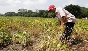 El gobierno de El Salvador entregó semillas de frijol resistentes a la sequía. (Foto: Secretaría de Comunicaciones)