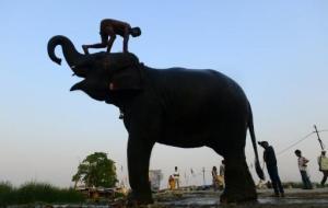 Un indio lava a su elefante en una calle de Allahabad el 9 de junio de 2015 (AFP/Archivos | Sanjay Kanojia)